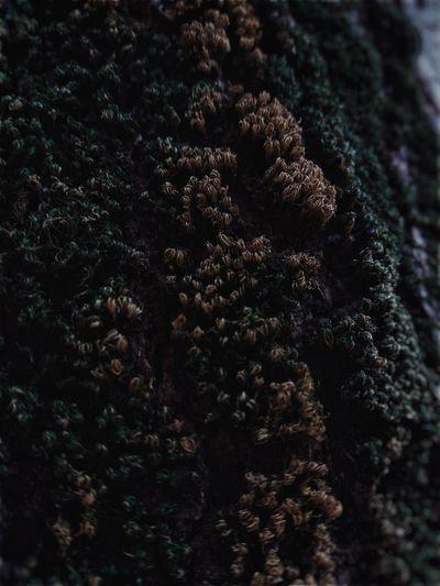 Briófitas Biologia Nature