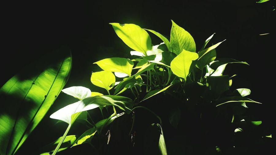 Leaf Flower