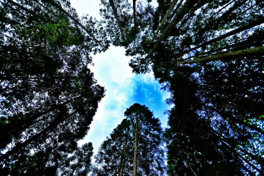 木々が描くアート♪(*´︶`*)✿ Trees Eyeem Best Shots - Silhouette Tree Silhouette EyeEm Nature Lover EyeEm Best Shots - Nature EyeEm Best Edits Natural Photography Tree And Sky Sky And Trees シルエット部