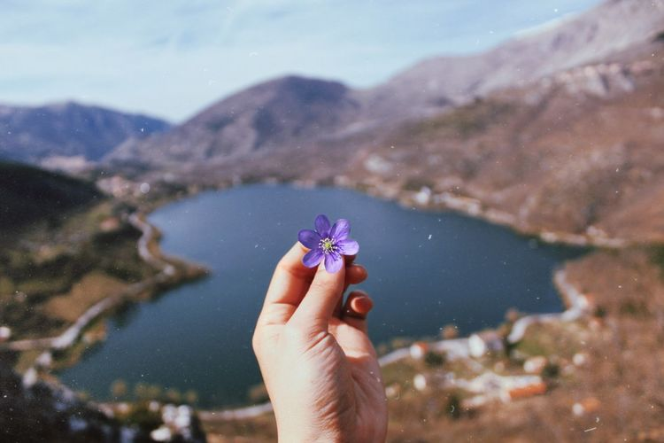 Cropped hand holding purple flower against lake amidst mountains