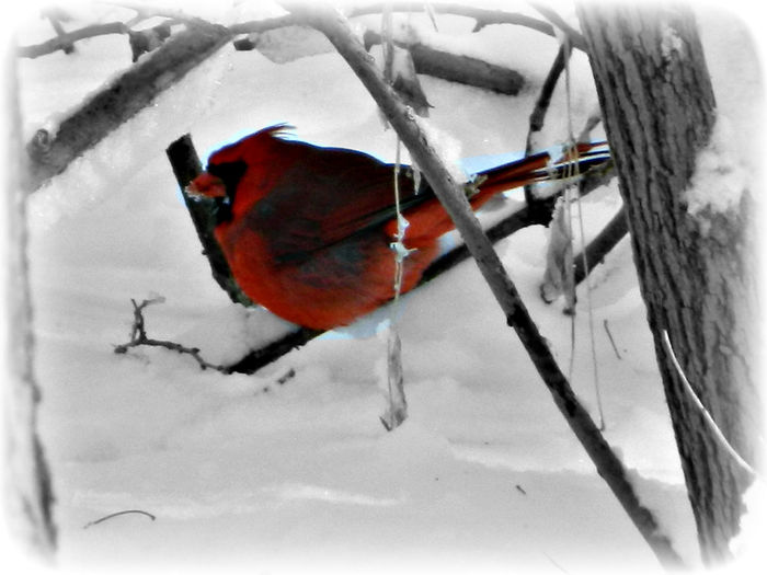 Bare Tree Bird Bird Photography Cold Finch Outdoors Perching Winter Its Cold Outside Springfield, Nebraska Mopac Trail Mopac Trail Cardinal