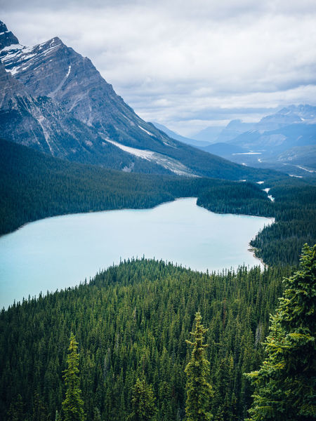 Spectacular Peyto Lake in Banff National Park. I saw many lakes there. This one was one of the most beautiful ones. The scale was astounding Alberta Banff  Banff National Park  Peyto Lake Beauty In Nature Canada Day Forest Lake Landscape Mountain Mountain Range Nature No People Outdoors Scenics Sky Tranquil Scene Tranquility Tree Turquoise The Week On EyeEm Shades Of Winter