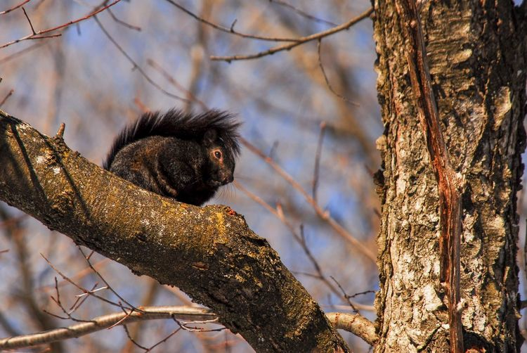 Squirrel views Tree Branch Animal Animal Wildlife Animal Themes Animals In The Wild One Animal Plant Mammal Nature Primate Vertebrate No People Focus On Foreground Trunk Tree Trunk Day Monkey Outdoors Low Angle View