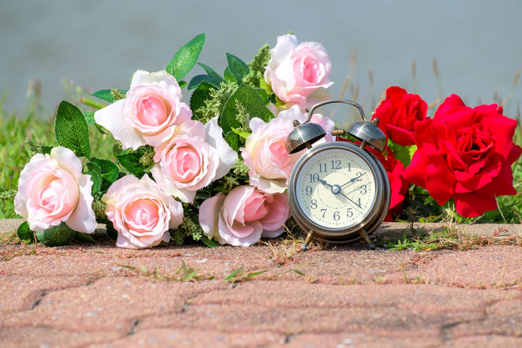 Alarm clock with roses on footpath