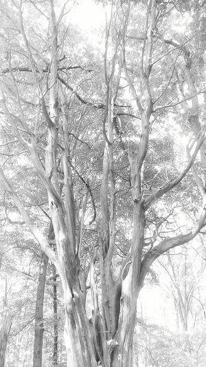 Nature walk. Enjoying Life Photooftheday Black And White Blackandwhitephotography Nature Natural Beauty Trees