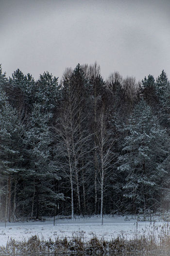 Trees on field during winter against sky