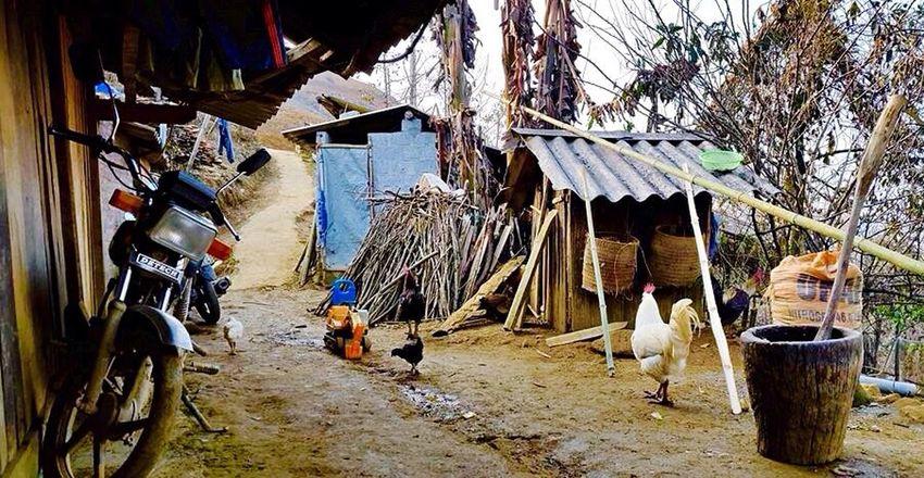 Sapa, Vietnam Hmong Life Backyard Chooks Chickens I Love Vietnam Amateur Photographer Just Learning So's House