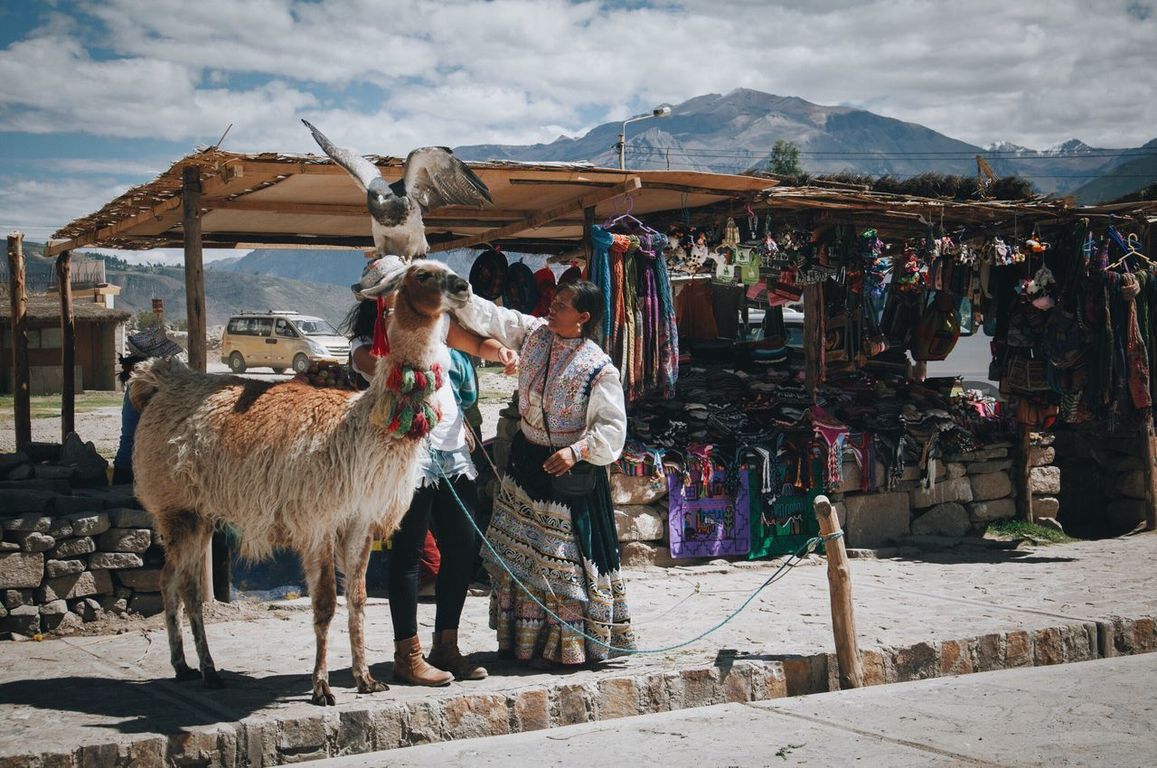 livestock, mountain, day, mammal, llama, outdoors, domestic animals, built structure, nature, sky, no people, architecture