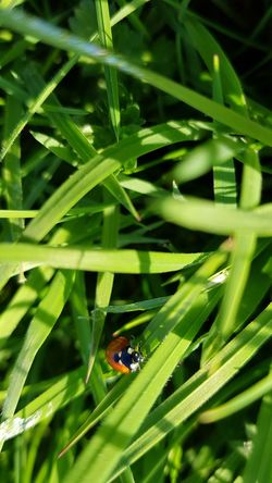 Ladybug Ladybird Leaf Biology Close-up Animal Themes Plant Grass Green Color