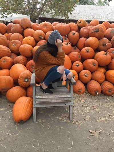 Pumpkin Patch Pumpkin Season Pumpkin Farm
