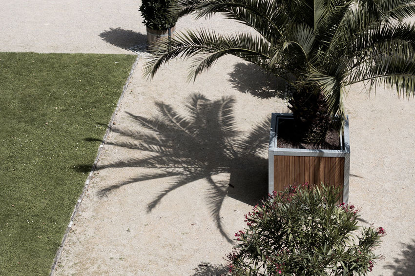 Palm Palm Leaf Palm Tree Architecture Building Exterior Day Grass Growth Nature No People Outdoors Palm Shadows Palm Tree Plant Shadow Tree
