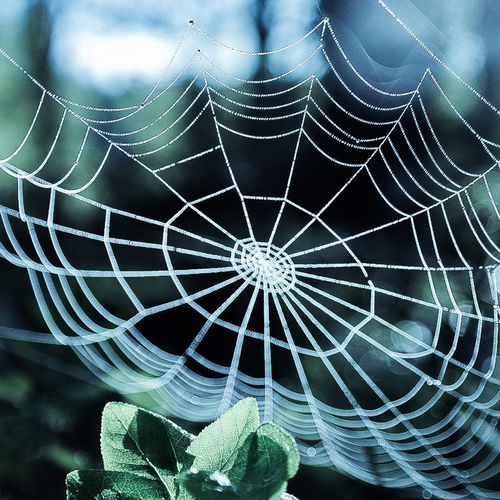 Naturewonderful Rain Drop Spiderweb Nature_collection