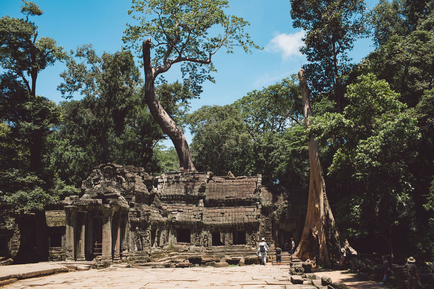 Siem Reap Cambodia Angkor Tree Plant Architecture History Ancient The Past Built Structure Nature Old Ruin Sky Day Place Of Worship No People Religion Ancient Civilization Belief Travel Destinations Old Travel Tourism Archaeology Outdoors Ruined Architectural Column