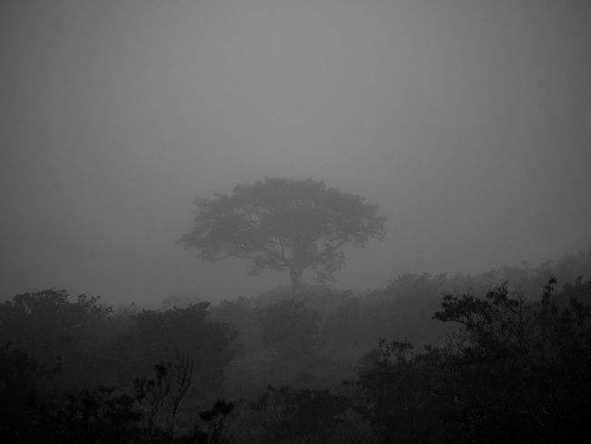 Nature EyeEm Nature Lover Blackandwhite Light And Shadow Monochrome Shillouette Trees TreePorn