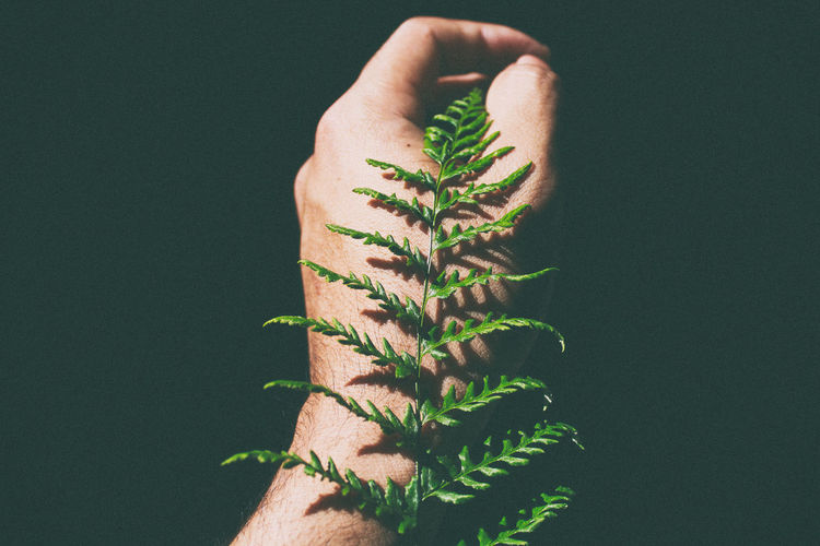 Black Background Darkness EyeEmNewHere Green Light Plant Black Background Close-up Darkness And Light Day Forest Green Color Hand Human Body Part Human Finger Human Hand Leaf Light And Shadow One Man Only One Person Outdoor Outdoors People Plant Real People