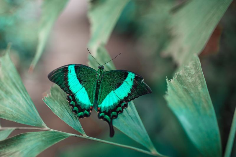 Animals In The Wild Wildlife Butterfly - Insect Outdoors Nature Leaf Animal Wildlife