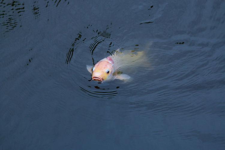 Fish Nature