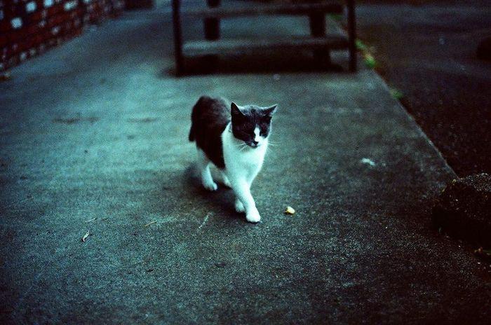 Cat Film 35mm Film CanonA-1