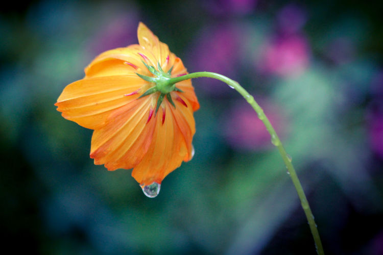 Close-up of wet flower in park