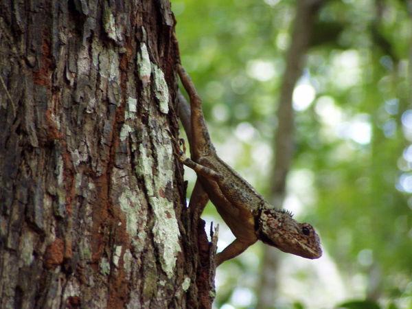 Amazon Amazonia Animal Themes Animal Wildlife Animals In The Wild Carajás Day Focus On Foreground Nature No People One Animal Outdoors Para Parauapebas Rain Forest Reptile Tree Trunk