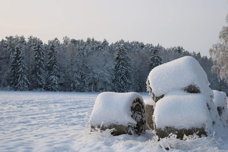 Swedish countryside in a snowy landscape Eyemphotography Eyem Gallery Eyem Nature Lovers  Eyembestshots Oxelösund Snow Snowlandscape Naturrlove Cold Temperature Winter Snow Frozen Nature Ice No People Outdoors Landscape Beauty In Nature Day Polar Climate Tree White Color Sky