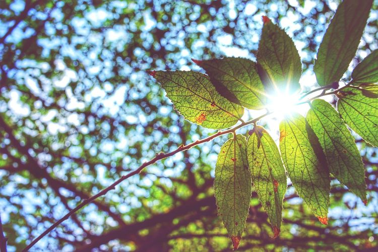 feeling better Tree Branch Leaf Lens Flare Close-up Sky Animal Themes Green Color