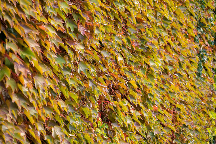 Morning walk in autumn in Berlin, Germany Full Frame Backgrounds No People Autumn Leaf Yellow Nature Plant Part Day Close-up Change Abundance Beauty In Nature Plant Outdoors High Angle View Moss Pattern Selective Focus Growth Leaves Autumn Morning Sunrise