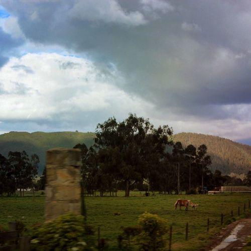 Paisaje veraniego en la sabana de Bogota Colombia
