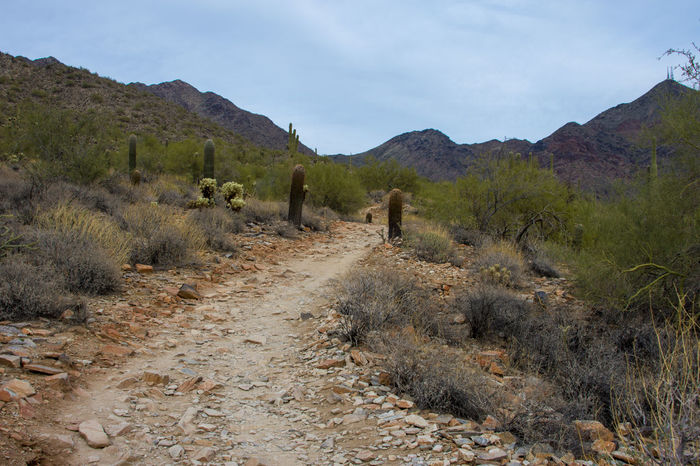 Cactus Desert Day Mountains Outdoors Path Forward Path In Nature Sky