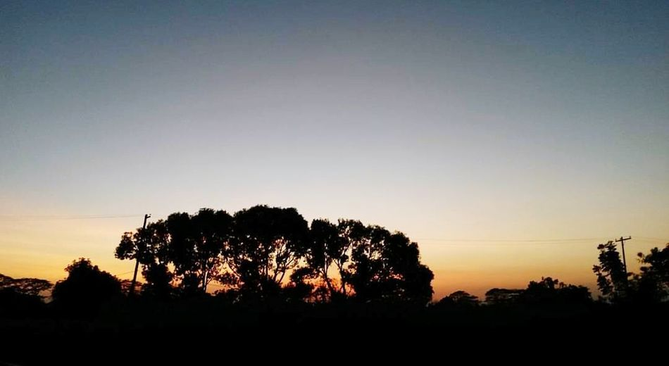 CLSU Nature 😍 Silhouette Nature Tree Sunset Tranquil Scene Beauty In Nature Tranquility Sky Scenics Tree Area No People Forest Outdoors Day