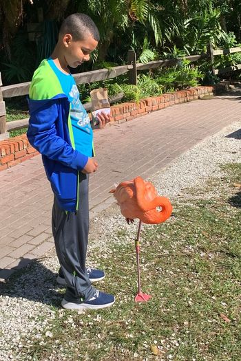 Flamingo Vertebrate Bird One Person Sunlight Real People Full Length One Animal Shadow Day Nature Animals In The Wild Domestic Animals Pets Animal Wildlife Outdoors Domestic Lifestyles