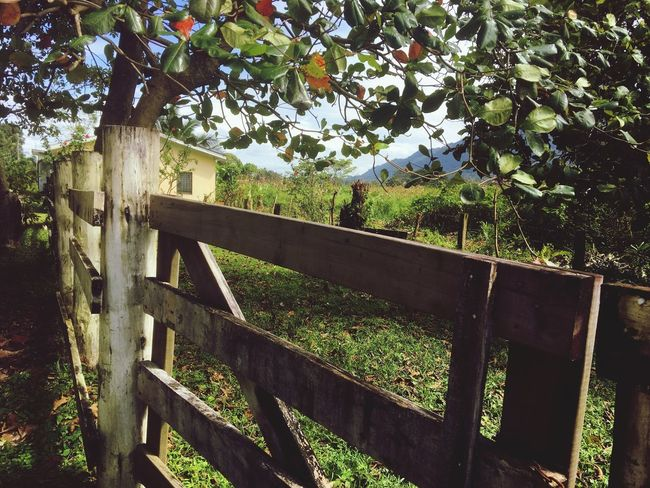 Local farm ranch Plant Tree No People Growth Fence Boundary Nature Day Railing Wood - Material Beauty In Nature Protection Architecture Outdoors Security Green Color Safety Built Structure Sunlight Barrier