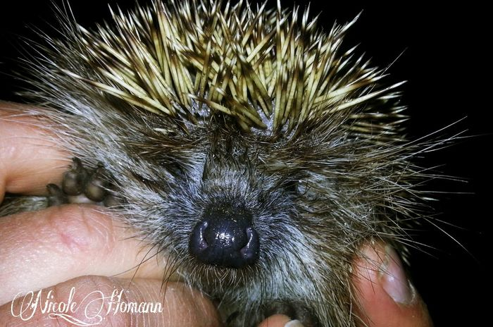 Animals Nature_collection Igel