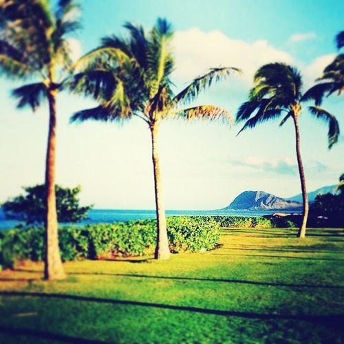 Hawaii West,Oahu Koolina Koolinabeach Morning Beach Palm Trees