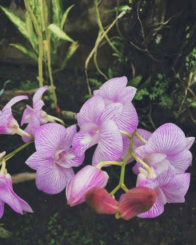Growth Beauty In Nature Nature Flower No People Close-up Freshness Blooming Leaf Outdoors Petal Plant Philippines