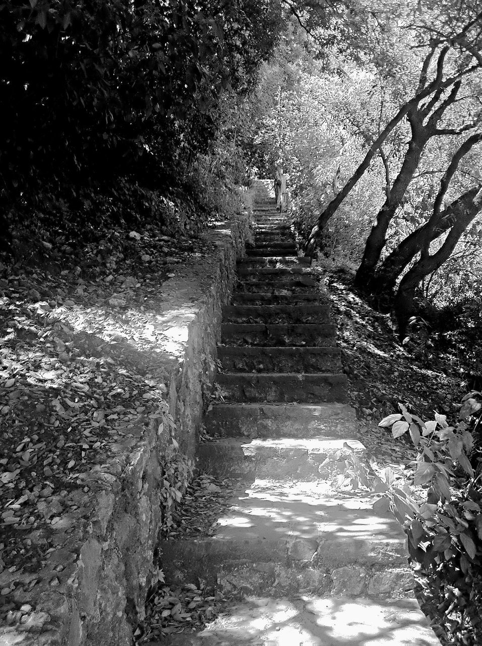 steps, steps and staircases, staircase, tree, the way forward, forest, nature, no people, day, outdoors