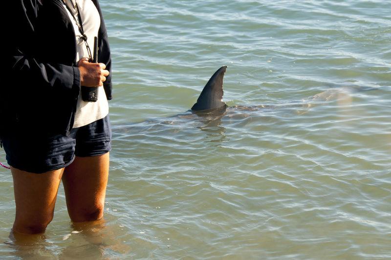 Wild Dolphin Australia Feeding  Dolphin Monkey Mia Wild