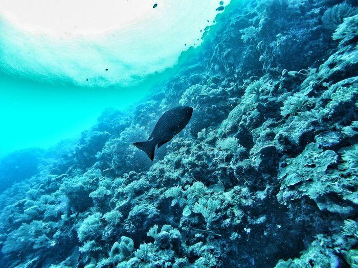Fish on ocean floor