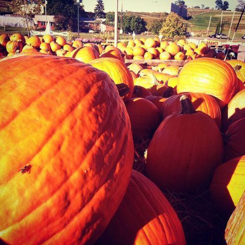 Yay! Pumpkins Happyfall