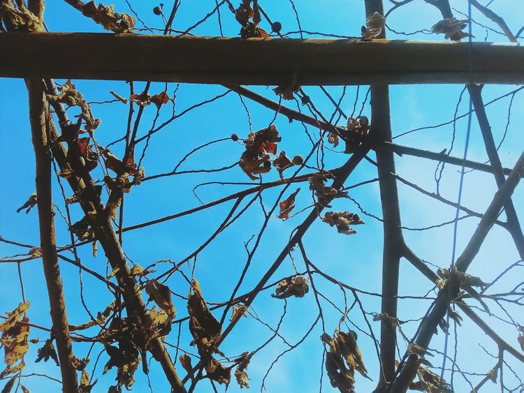 Tree Branch Day Low Angle View No People Outdoors Growth Sky Nature Flower Close-up Architecture Tree Happiness Photography VSCO Cam EyeEm Nature Lover EyeEm Best Shots NikonLife Low Angle View TurnUpTheBrightness BYOPaper! Live For The Story Paint The Town Yellow Cheerful
