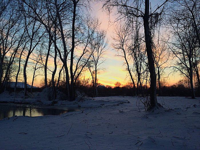 Winter Snow Tree Vilkovo Landscape Nature Sunset Ice