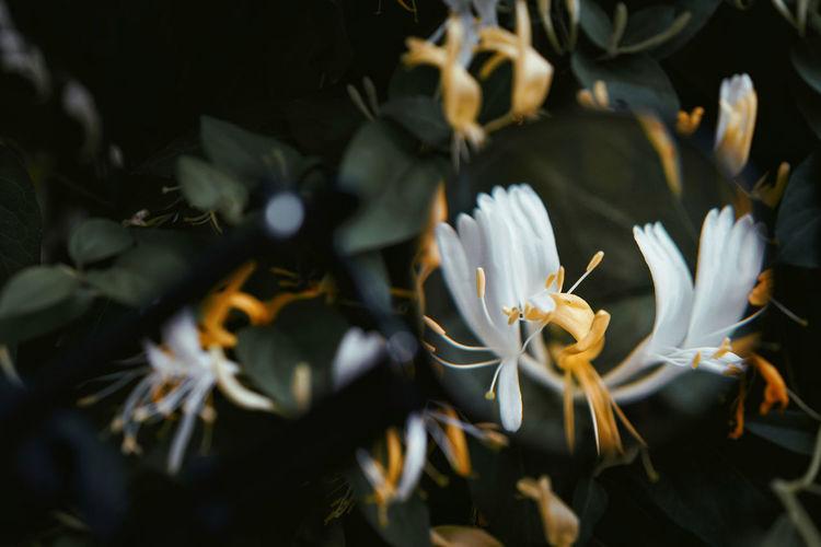 Selective Focus Nature Abundance Magnifying Glass Magnifier Flowers Flower Black Background Flower Head Close-up