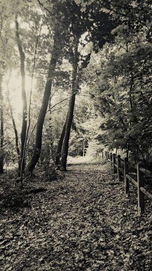 La nature ressource Poete :) First Eyeem Photo