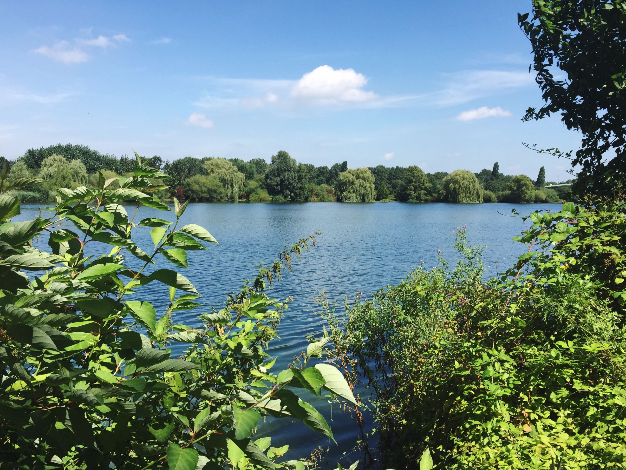 growth, water, nature, tree, sky, reflection, beauty in nature, scenics, tranquility, tranquil scene, lake, plant, day, no people, outdoors