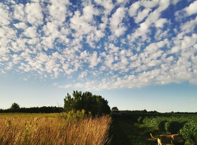 My Running View Farm Life Country Life Eyeem Michigan EyeEm Nature Lover Clouds And Sky