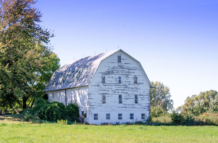 a rustic white barn in Michigan USA Agriculture Barn Farm Michigan, USA Rustic Barn Architecture Building Exterior Built Structure Clear Sky Day Field Grass Landscape Nature No People Outdoors Sky Tranquility Tree