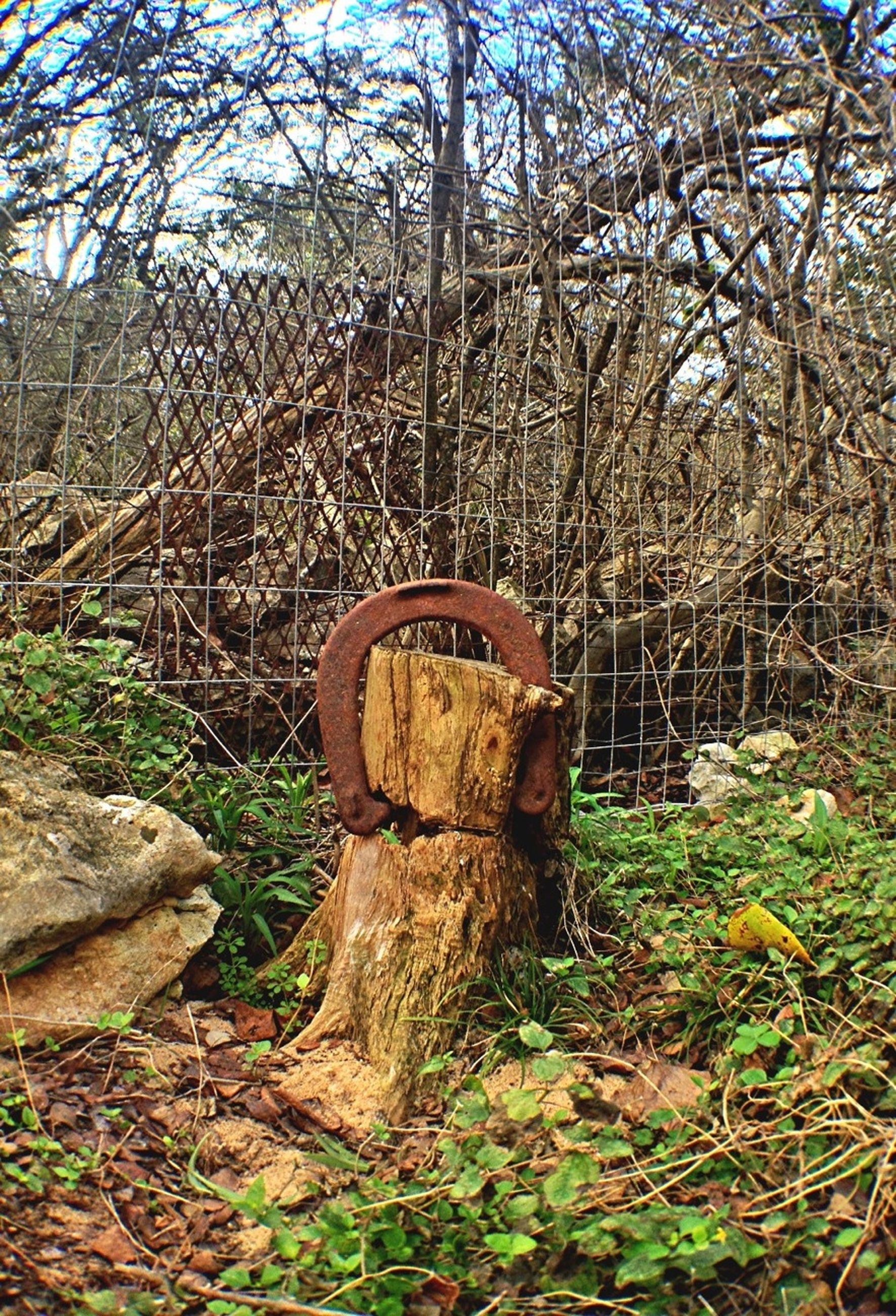 grass, tree, growth, field, tranquility, plant, nature, wood - material, abandoned, forest, tree trunk, day, outdoors, tranquil scene, old, no people, landscape, dry, damaged, grassy