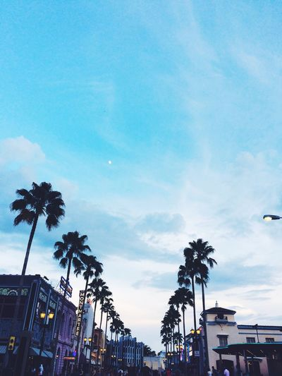 Universal Studios Orlando Universal Studios  Florida Palm Trees Tree Cloud - Sky Palm Tree Plant Tropical Climate Architecture