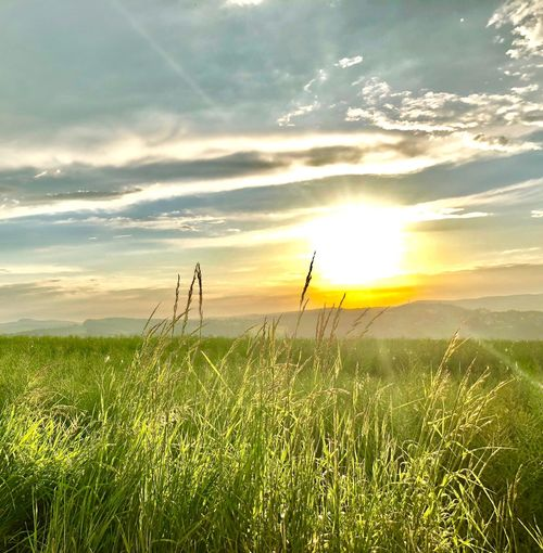 Collect MOMENTS not THINGS 🙌 Wienerwald  Iphonephotography Sunset Idyllic I Love Nature! Clouds Sky Beauty In Nature Plant Field Growth Land Scenics - Nature Tranquility Tranquil Scene Sunlight Landscape Nature Rural Scene Agriculture Sun Grass No People