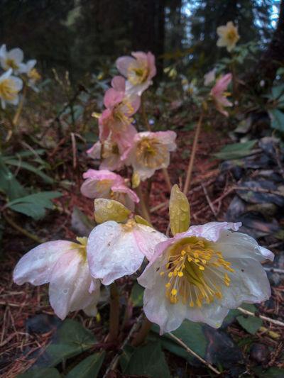 Nature Color Natur Colors Spring Mountain Flower Head Flower Leaf Close-up Plant Leaves